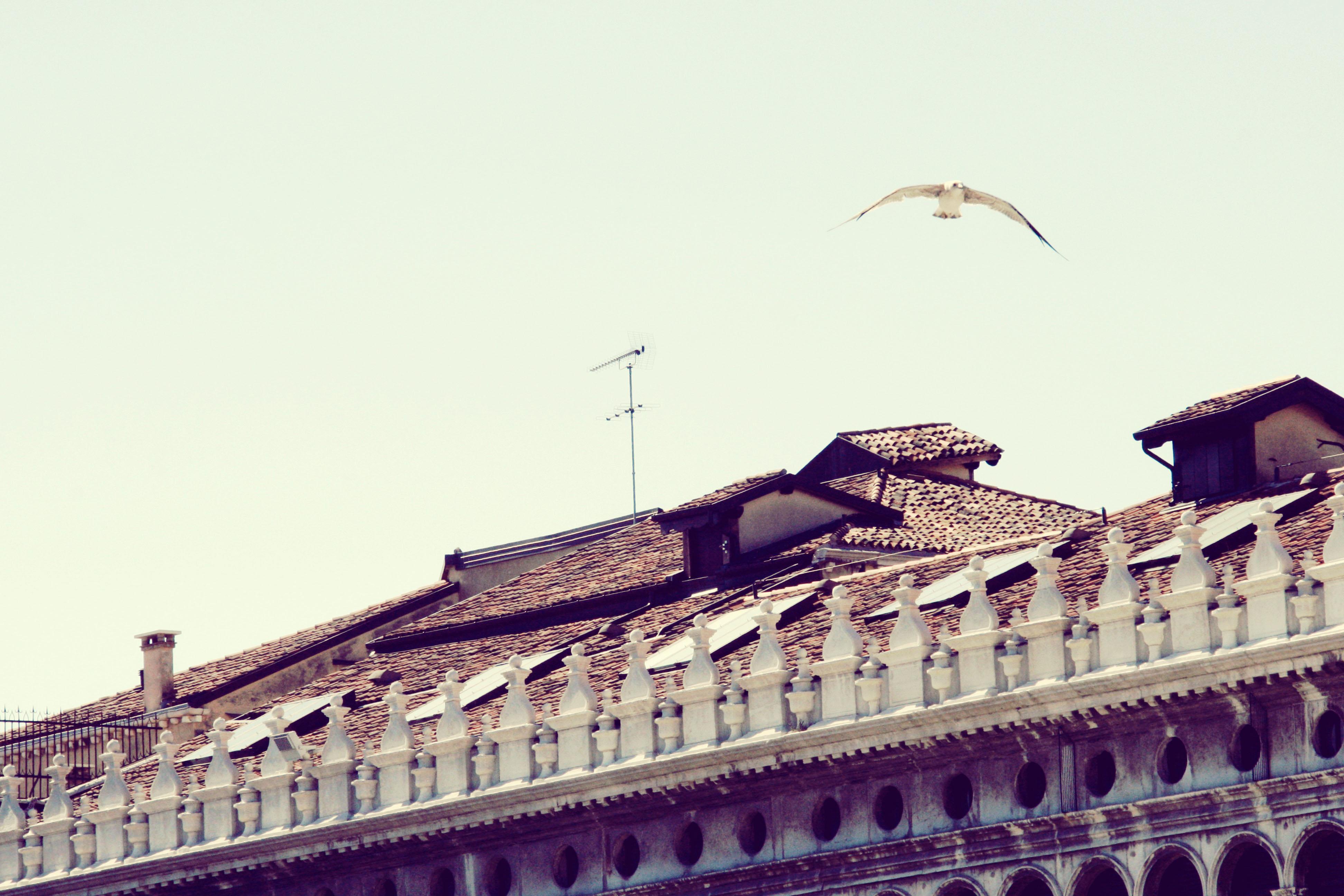 Venezia 2013 I (13)