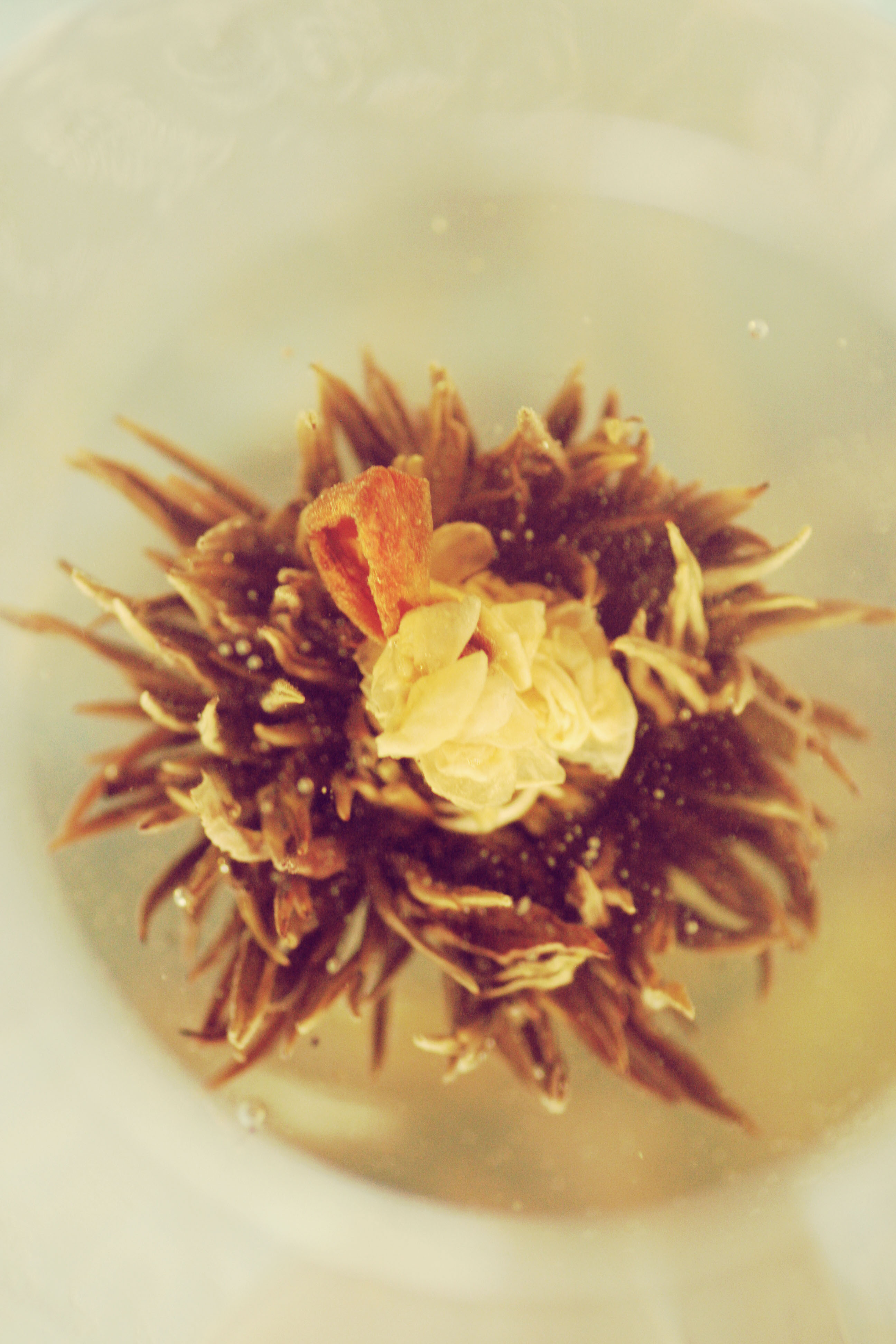flower of tea (3)