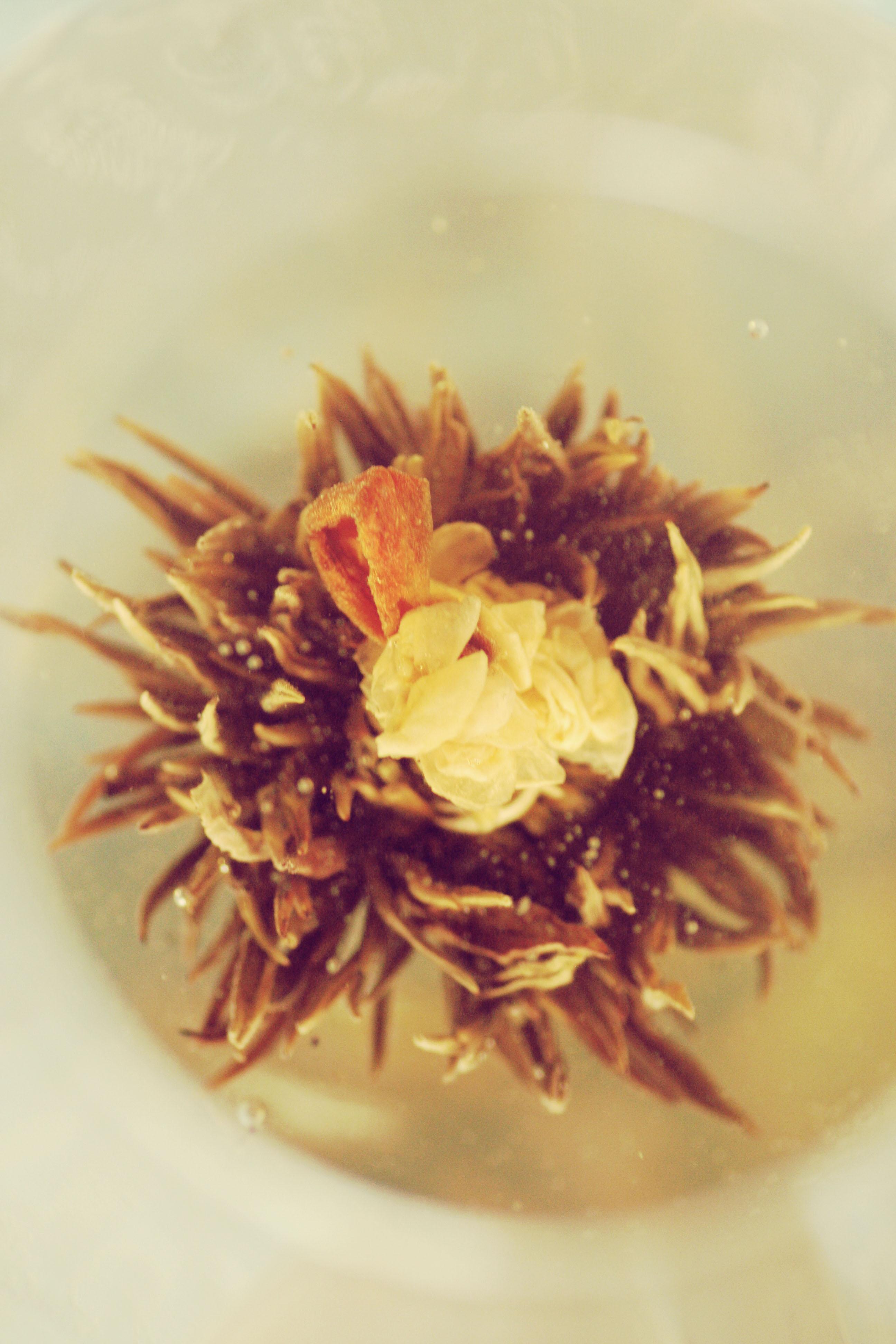 flower of tea (3)