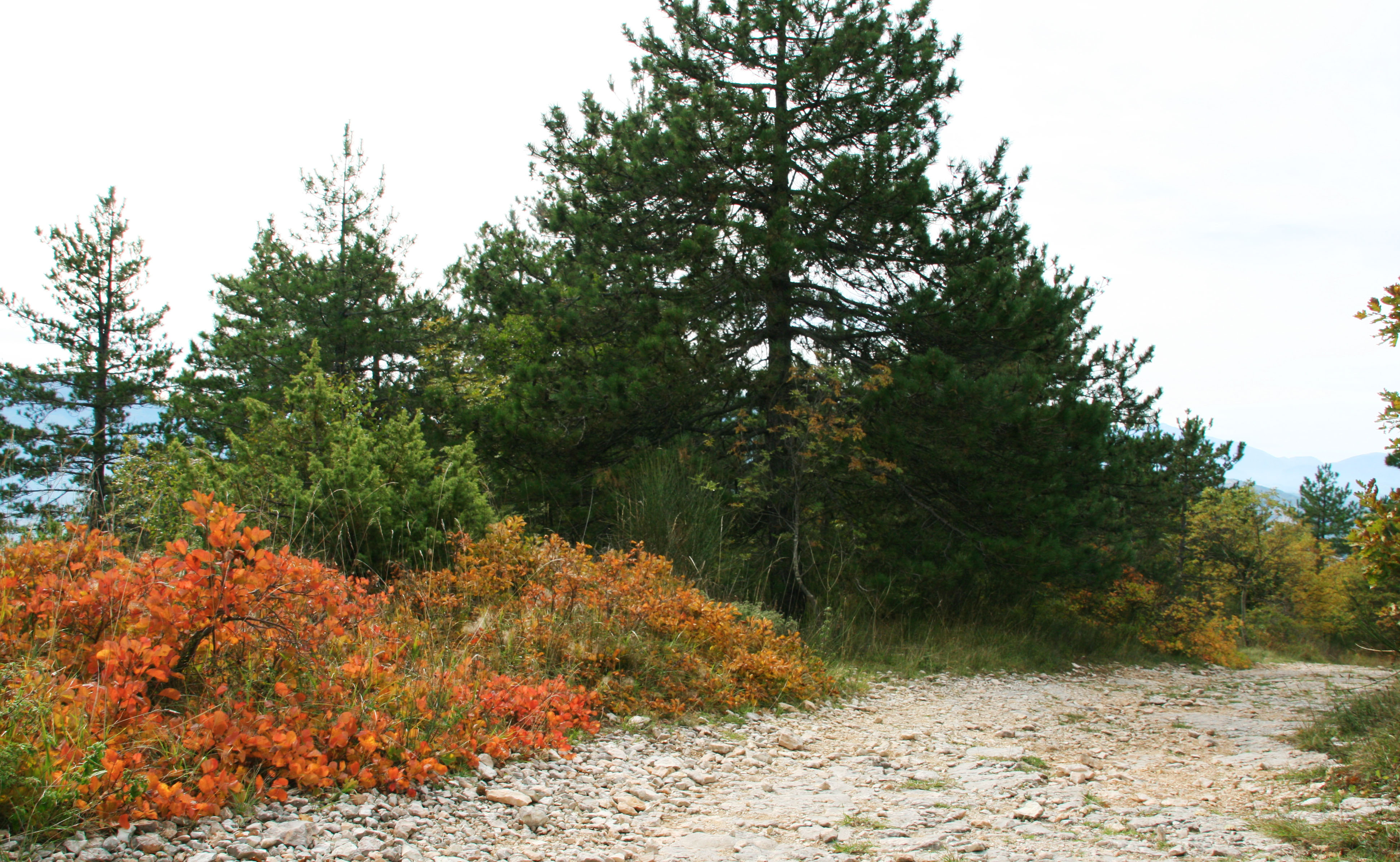 nel bosco (13)