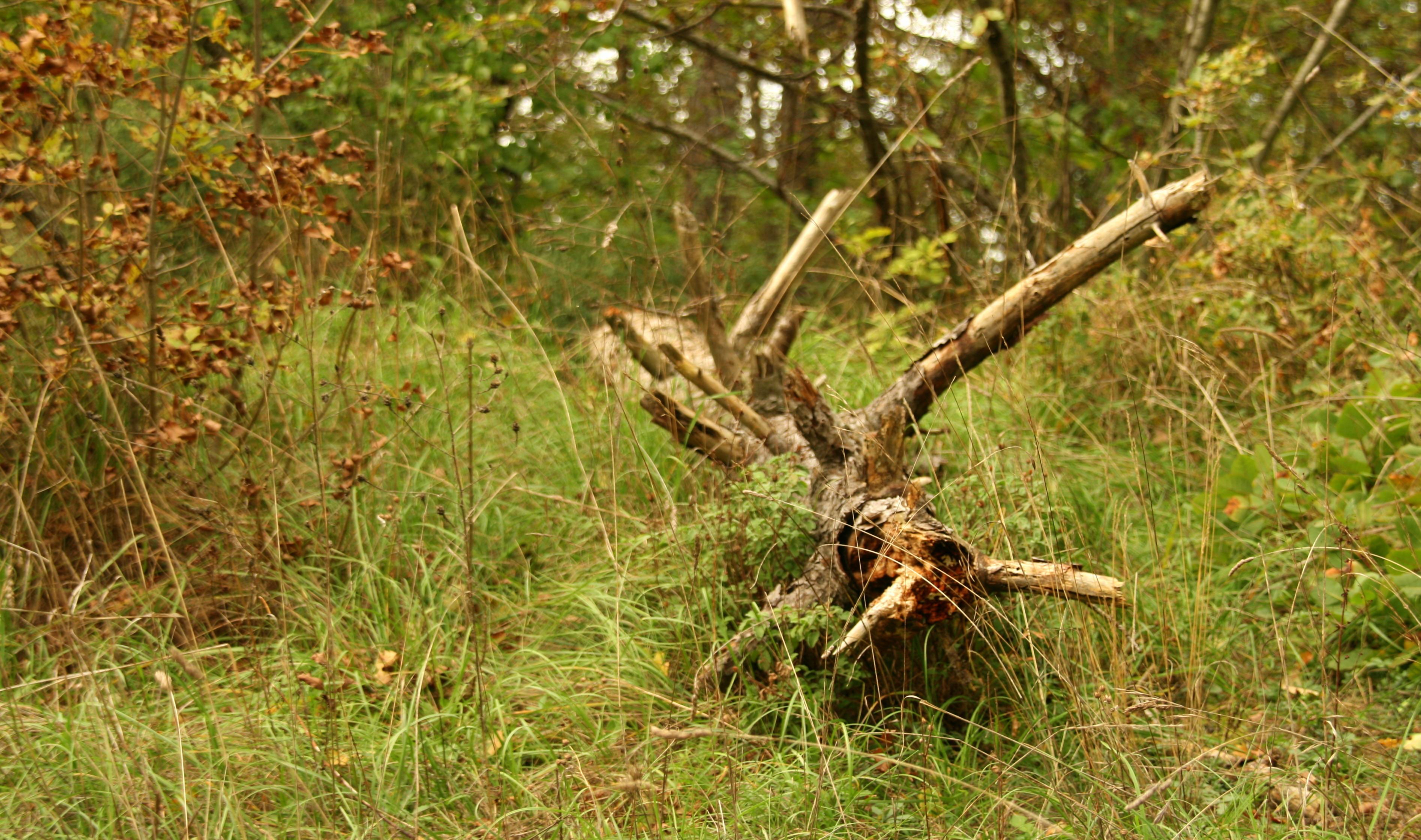 nel bosco (9)